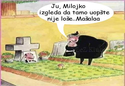 Ju Milojko