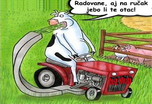 Savremena Crnogorska krava