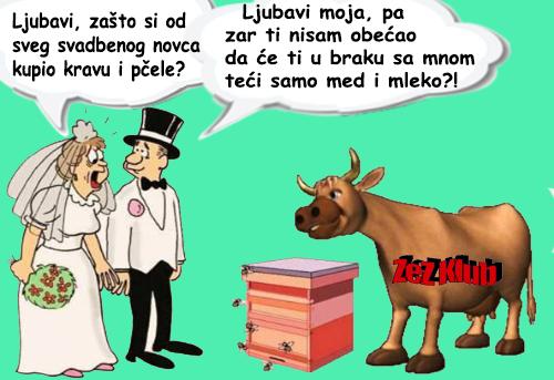 Ljubavi, zašto si kupio kravu i pčele @ crtane slike - humor u stripu